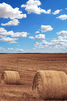 agricultural landscape with hay